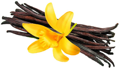 graphic of vanilla pods and flower